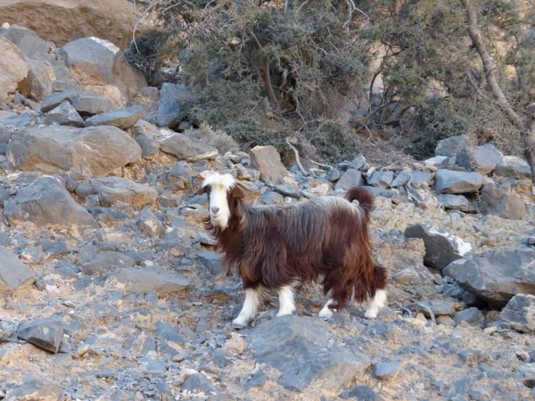 wadinakhr