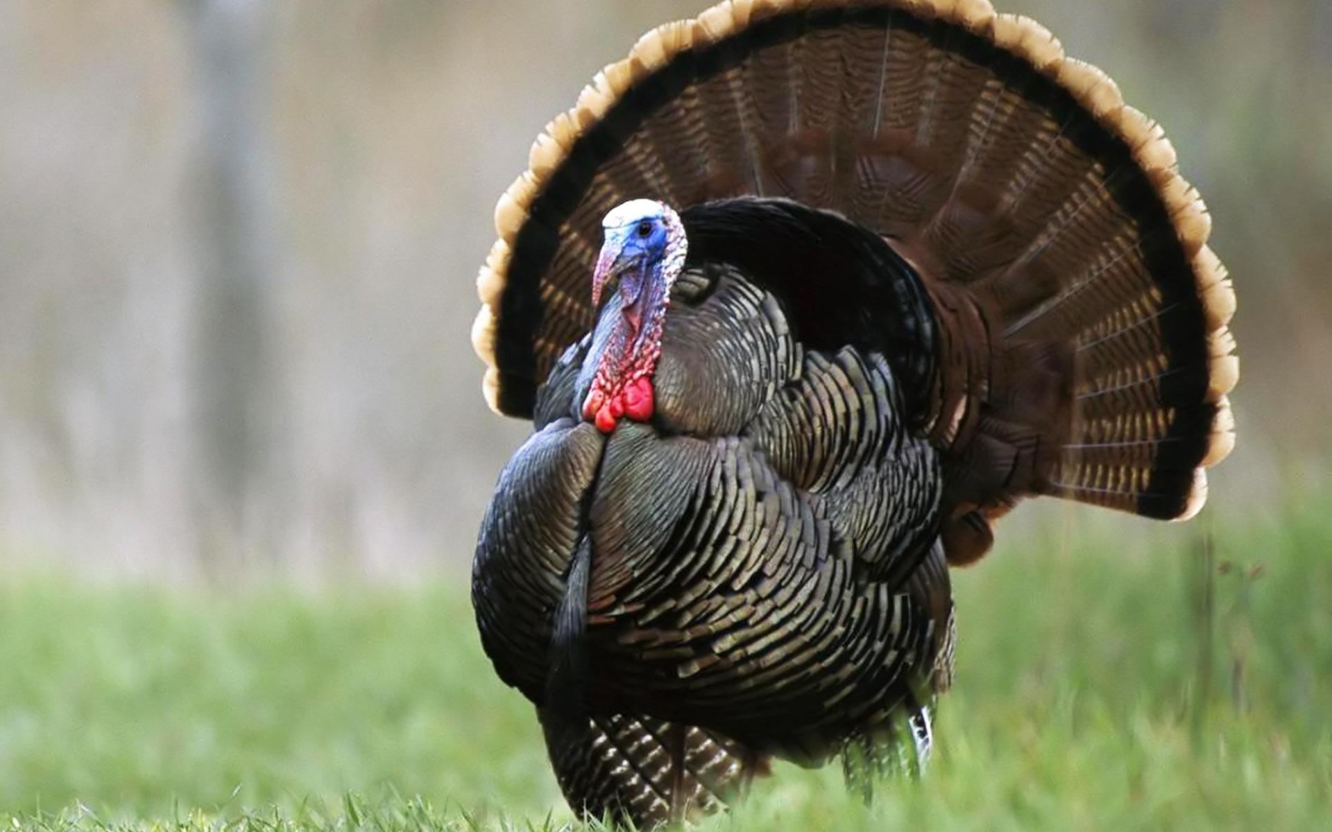 turkeyfood5